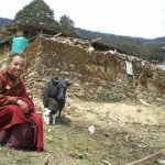 Lama Namgay with a baby yak